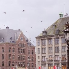 Dam Square and its pigeons