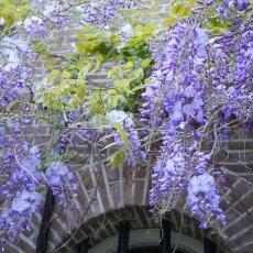 Spring snapshots 05