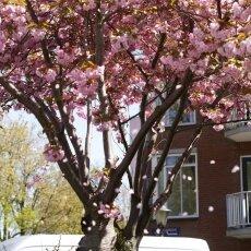 Spring snapshots 10