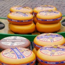 Alkmaar Cheese Market 08