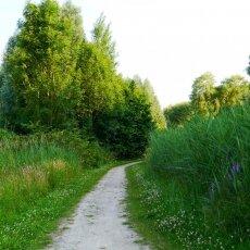 Amsterdamse Bos 06
