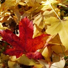 Autumn mood 01