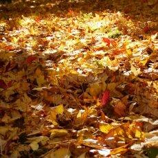 Autumn mood 02