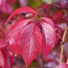 Autumn mood 19