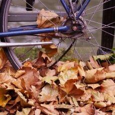 Autumn mood 21