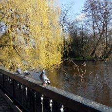 In Vondelpark