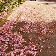 Spring Blossom 04