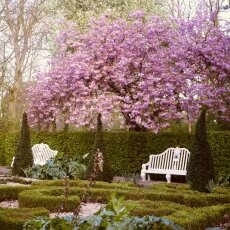 Spring Blossom 03