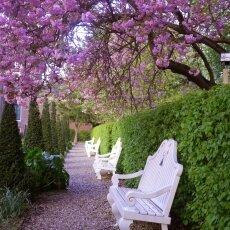 Spring Blossom 05