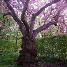Spring Blossom 06