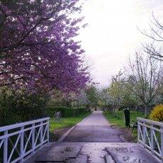 Spring Blossom 07