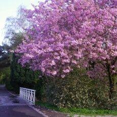 Spring Blossom 08
