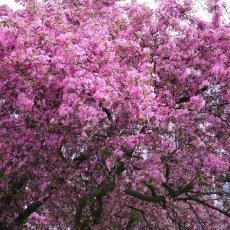 Spring Blossom 10