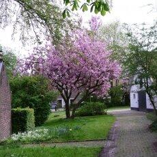 Spring Blossom 11