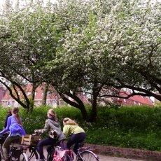 Spring Blossom 12