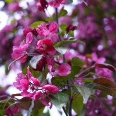 Spring Blossom 13