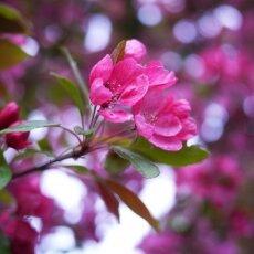 Spring Blossom 14