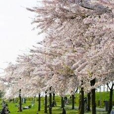 Spring joy 02