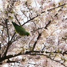 Spring joy 04