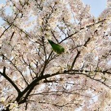 Spring joy 05