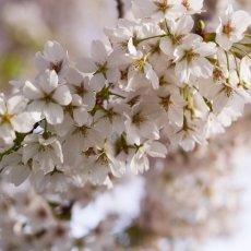Spring joy 06