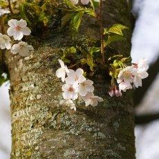Spring joy 08