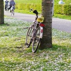 Spring joy 09