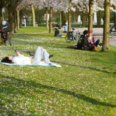 Spring joy 11