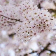 Spring joy 13