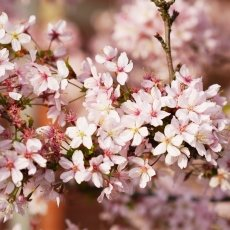 Spring joy 19