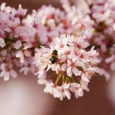 Spring joy 21