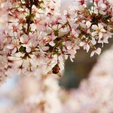 Spring joy 22