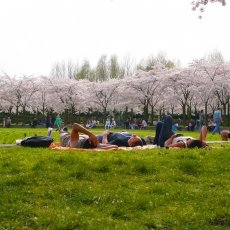 There is nothing better than a nap under the cherry trees