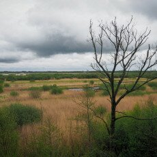 De Alde Feanen National Park 18