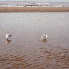 December at the beach 04