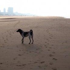 December at the beach 10