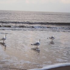 December at the beach 22