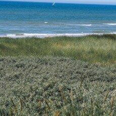 Dunes vegetation 02