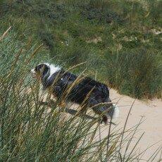Dunes vegetation 10