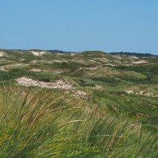 Egmond aan Zee dunes