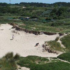 Dunes vegetation 28