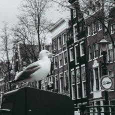 Amsterdam city centre empty 06