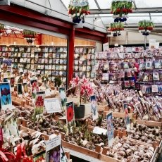Flower Market Amsterdam 02