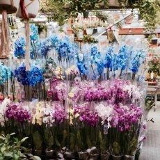 Flower Market Amsterdam 04