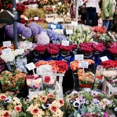 Flower Market Amsterdam 08