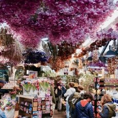 Flower Market Amsterdam 12