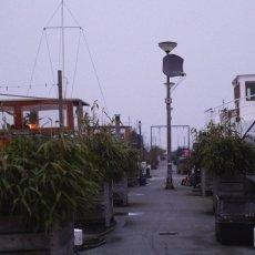 Foggy day on Westelijke Eilanden 11
