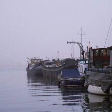 Foggy day on Westelijke Eilanden 12