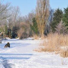 Frozen Canals Amsterdam 10