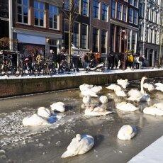 Frozen Canals Amsterdam 02